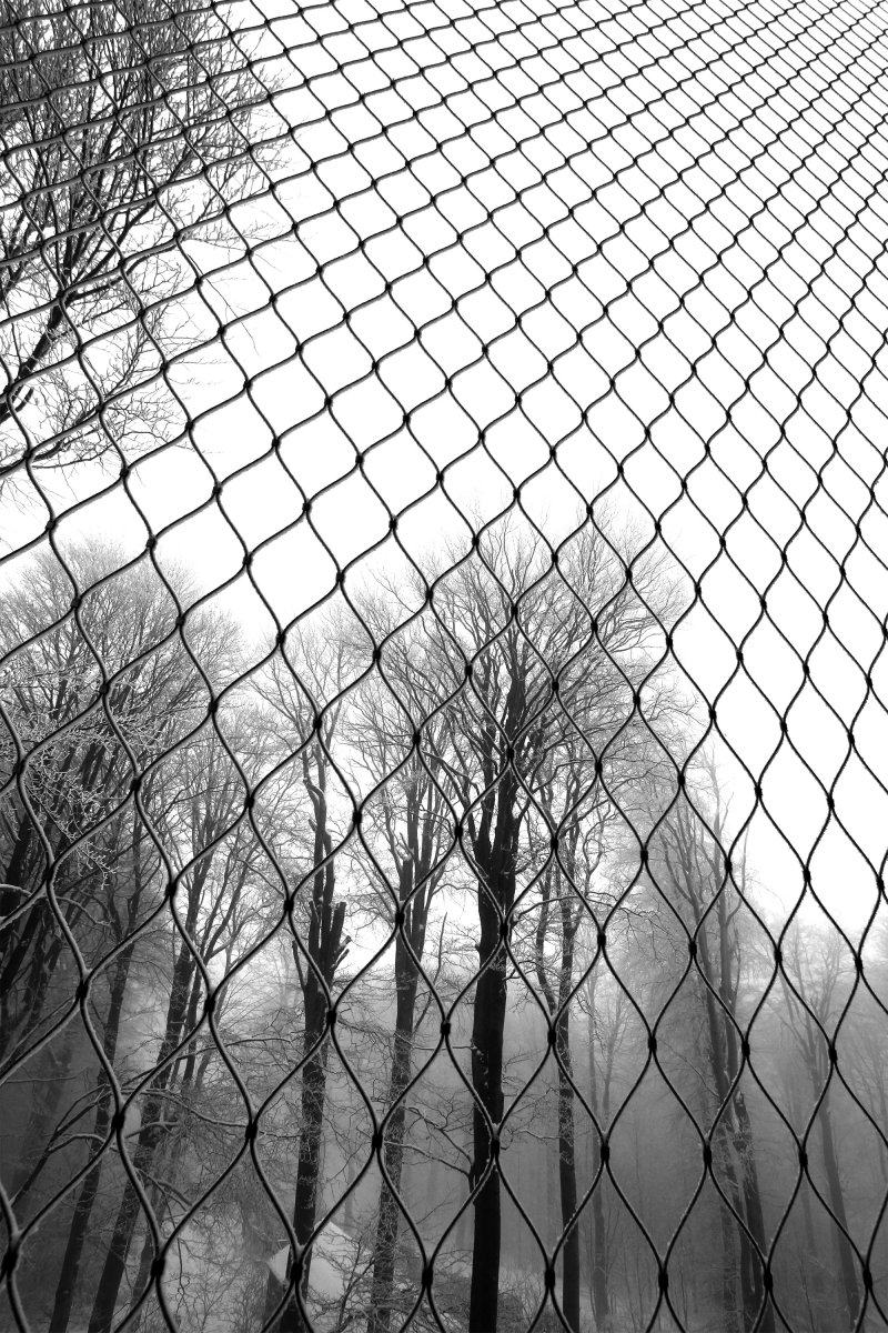 view through the mesh